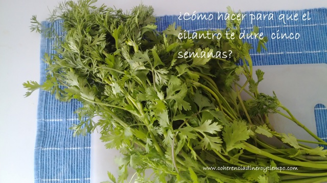 cilantro.1
