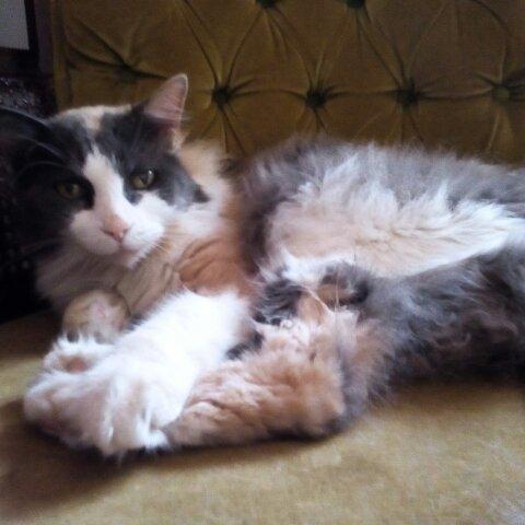 La gata de mi esposo, en su mejor pose: la de reina