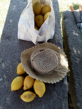 Cosecha de Limones