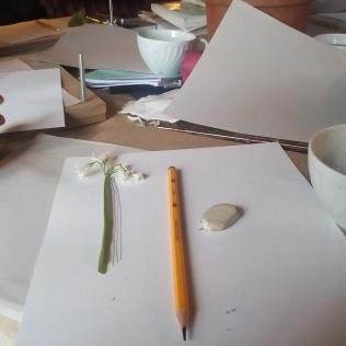 Dibujando plantas