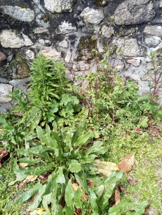 Malas hierbas de mi jardín