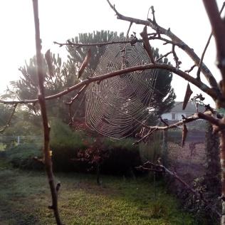 Telaraña en un manzano