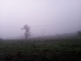 Neblina otoñal