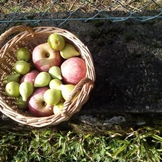 Manzanas e higos